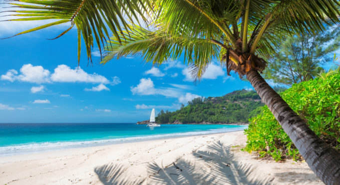 Beautiful sandy beach with palm and a sailing boat in the turquoise sea on Jamaica Paradise island.