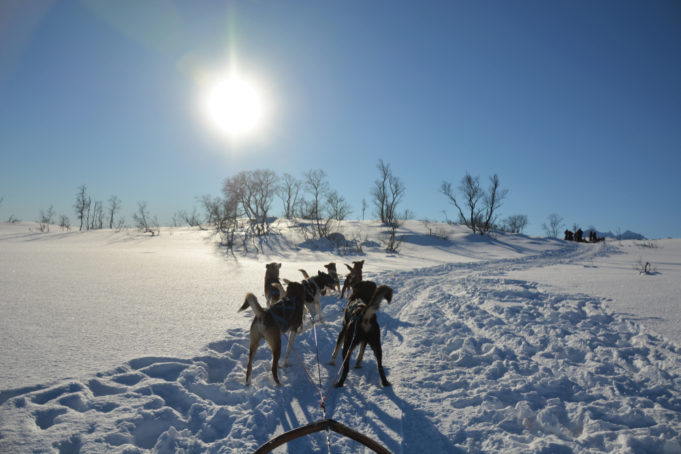 TROMSO, NORWAY - MARCH 7, 2017: Dog sledding tour on a cold and chilly winter day at the mountains of Tromso