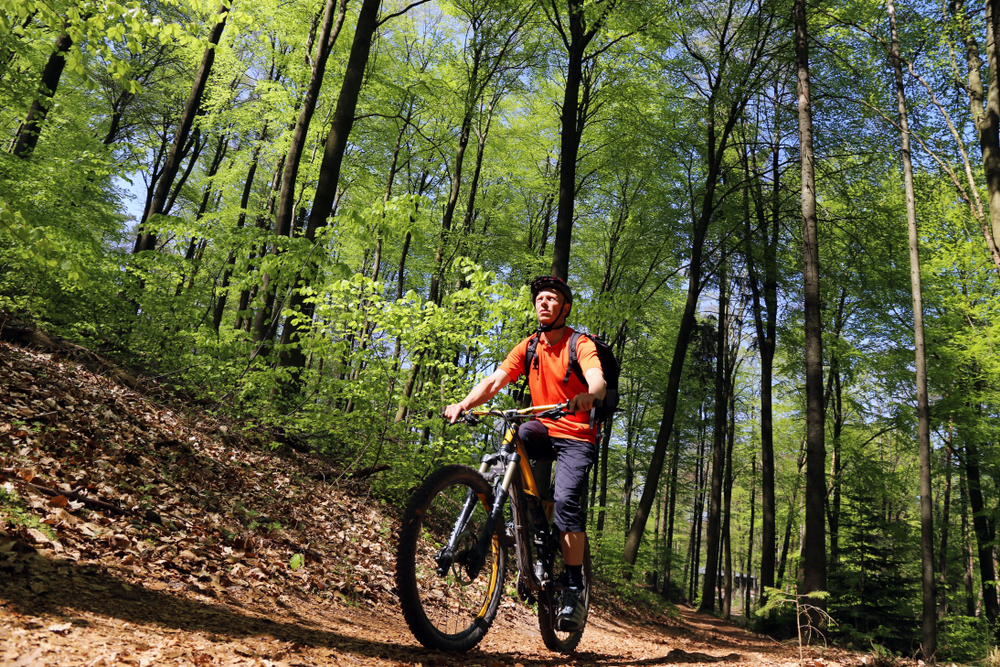 Mountain biker in the summery forest