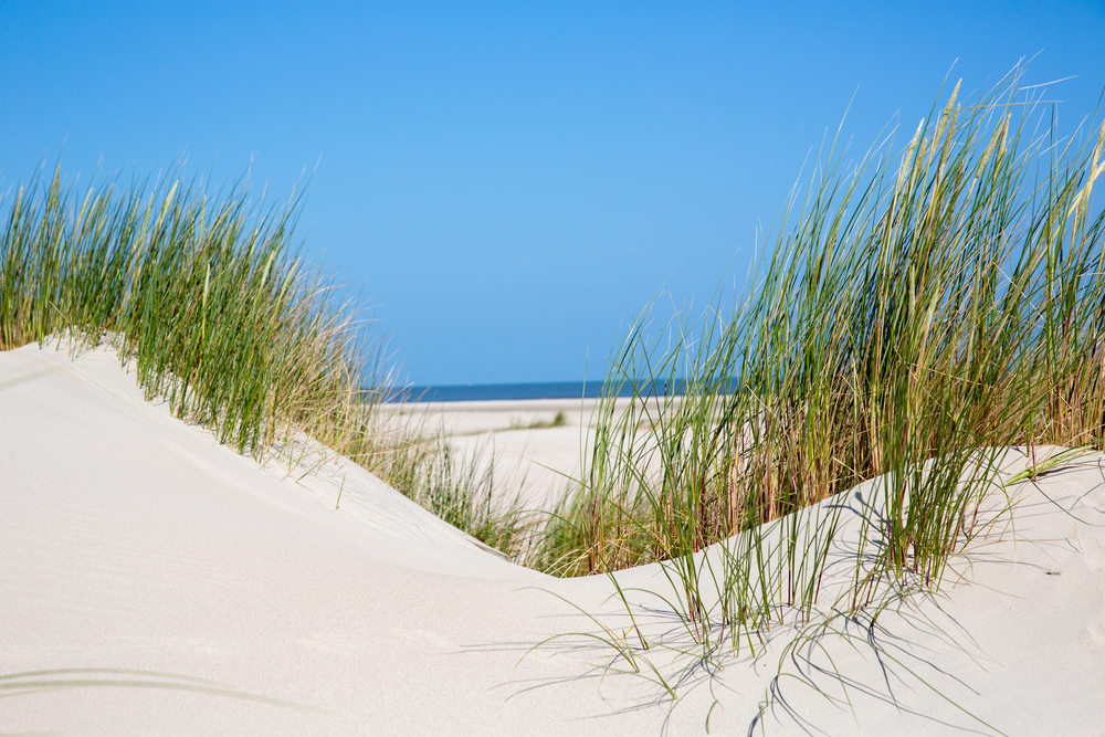 dune at the coast of the German Sea (Island Norderney/Germany)