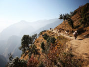 Donkeys on Himalayas/Donkeys on the way to Everest base camp.