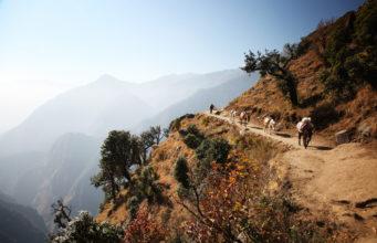 Donkeys on Himalayas/Donkeys on the way to Everest base camp.