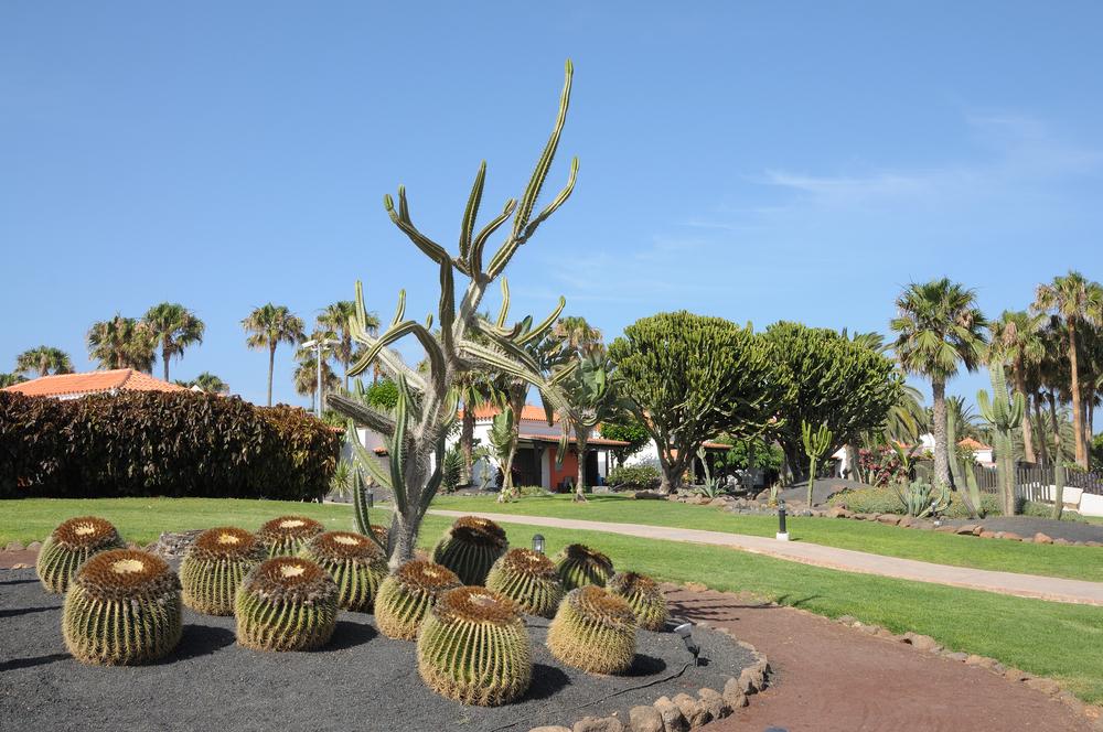 Cactus garden in Caleta de Fuste, Fuerteventura