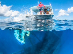 Wreck Diving in Grand Cayman