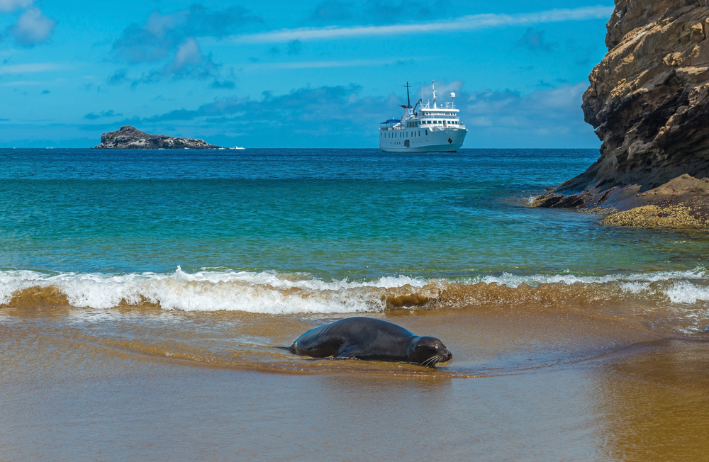 A sea lion on a sandy beach on the Galapagos Islands with a cruise ship in the background, Ecuador.