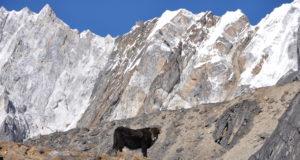 Annapurna, Himalaya, Nepal
